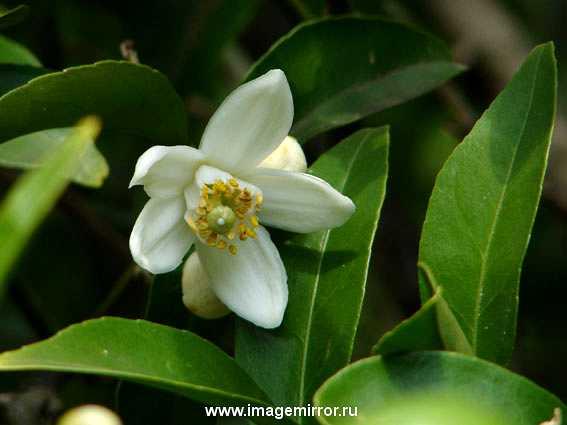 glavnye tsvety v parfyumernoy industrii 3